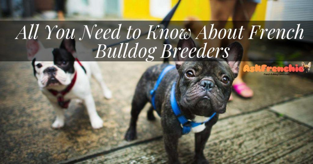 best-french-bulldog-breeders