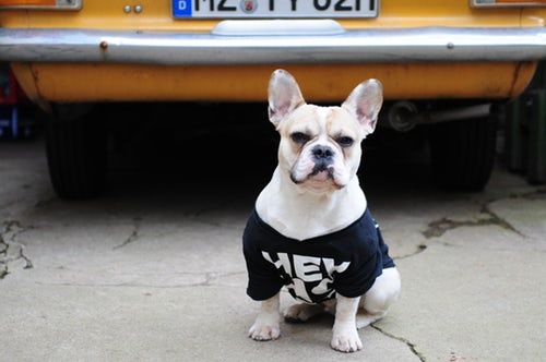 french bulldog clothes