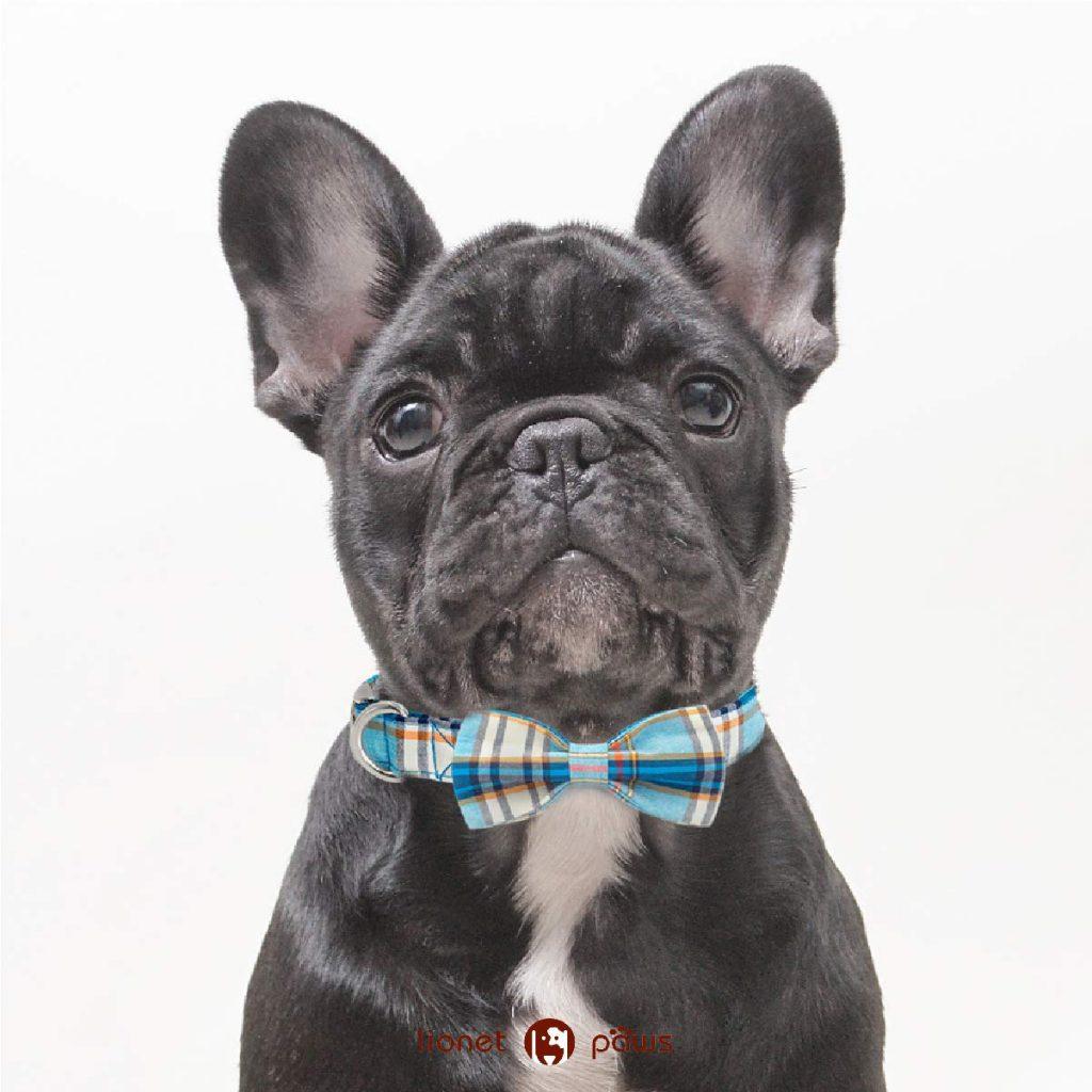 french bulldog collars