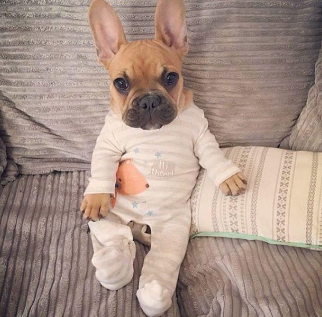 french bulldog onesie
