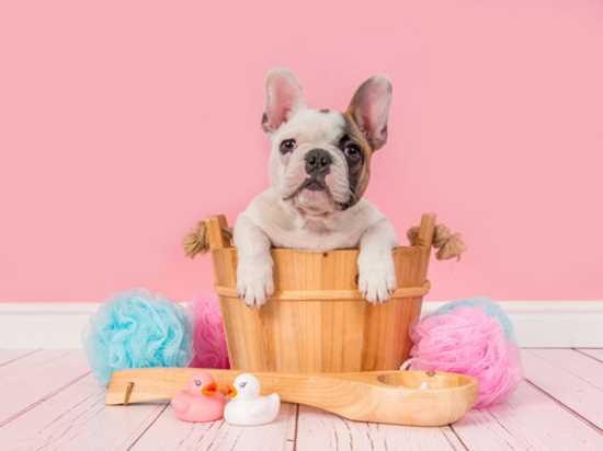 best brush for a french bulldog