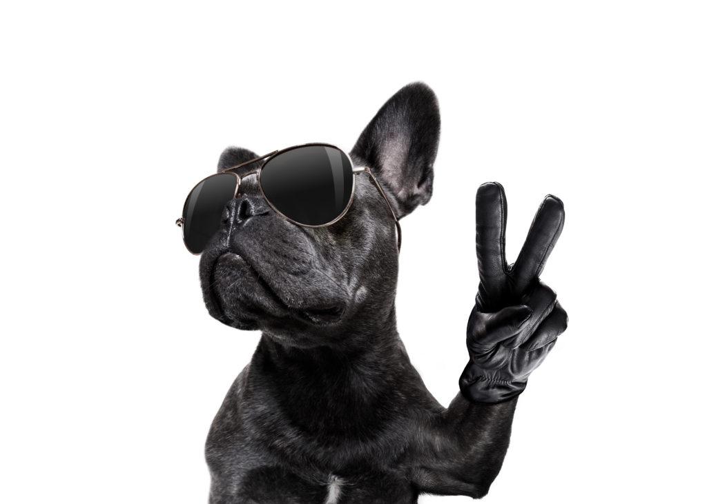 french bulldog paws
