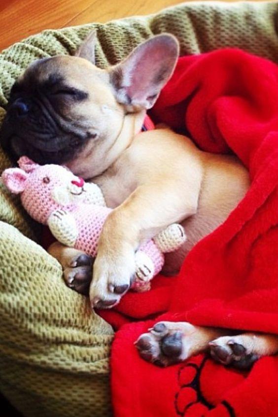 cute french bulldog sleeping toy
