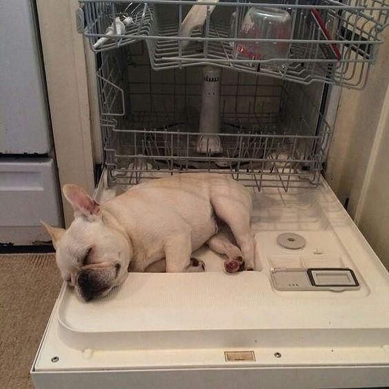french bulldog nap time