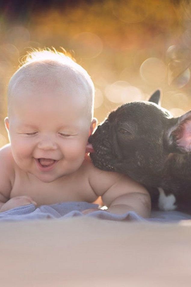 kid french bulldog lick friends
