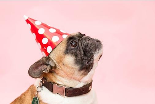french-bulldog-puppies-hat