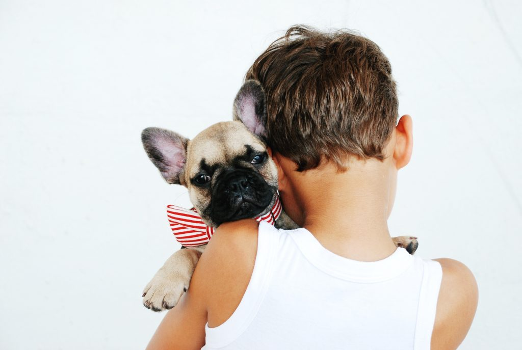 french bulldog and kids- child