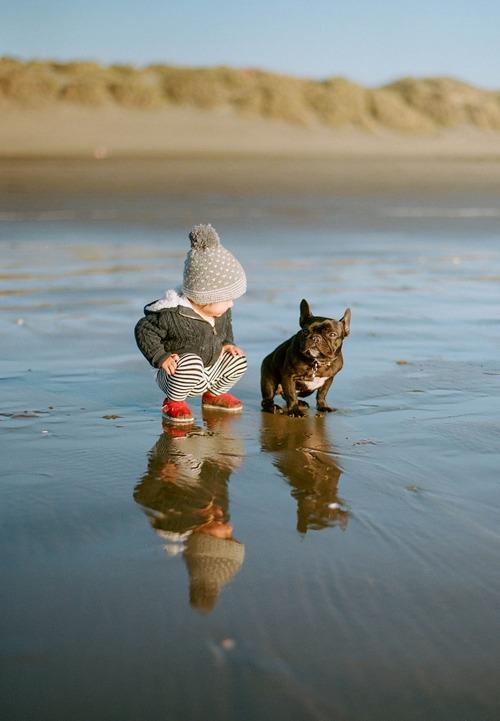 french bulldog and kids playing