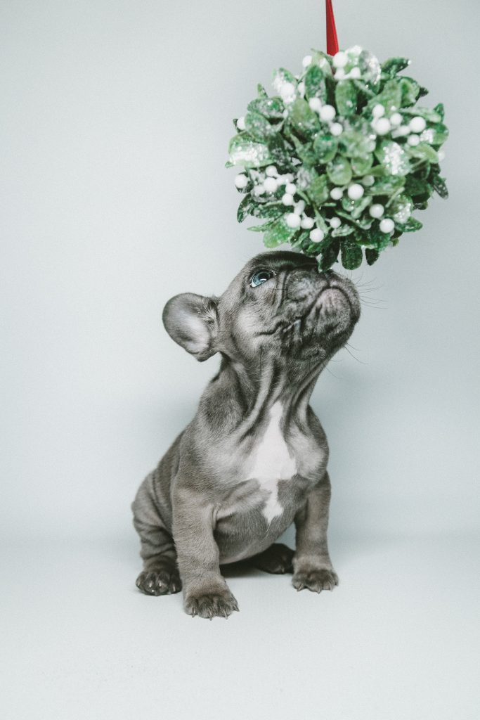 french bulldog skin problems flowers