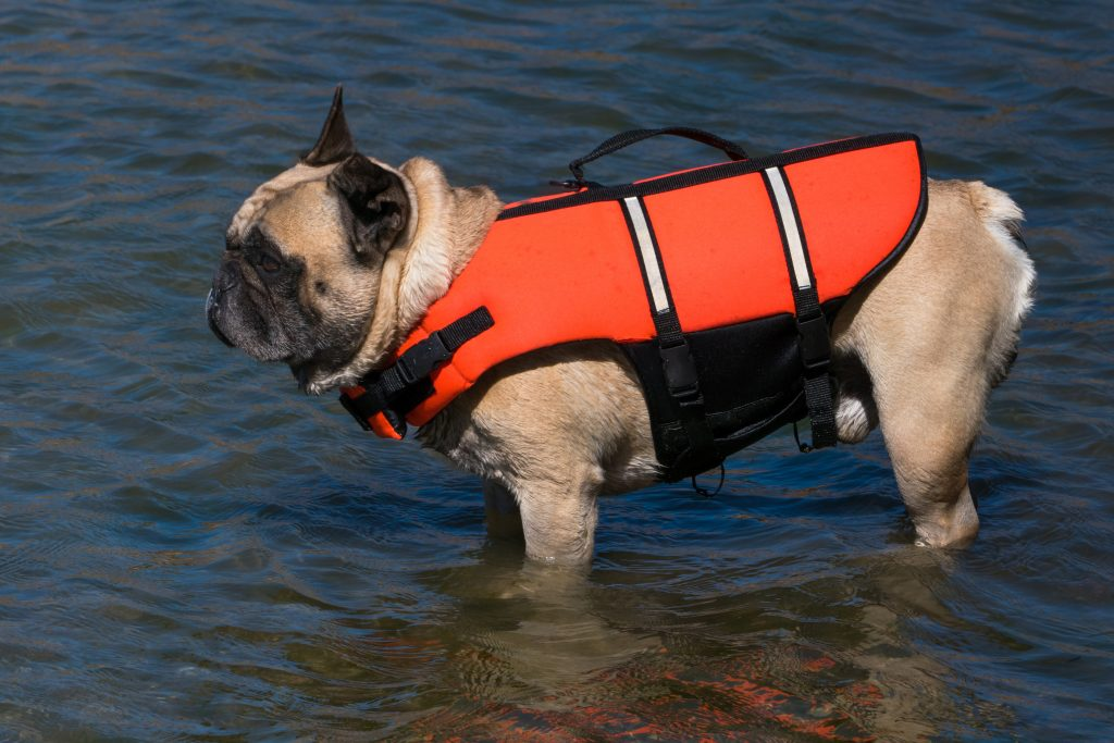 french bulldog life jacket