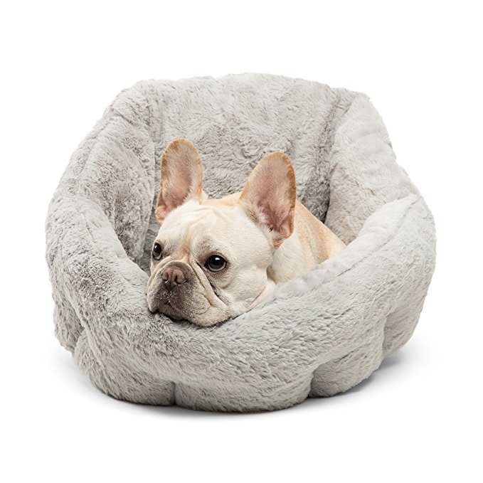 best french bulldog beds
