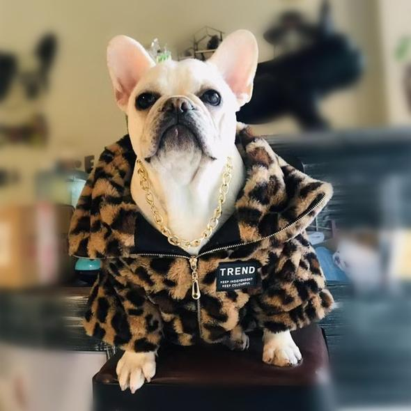 french bulldog jackets 1