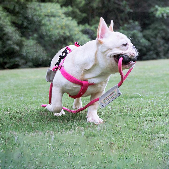 best french bulldog harnesses