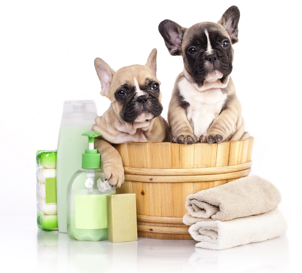 shampoo for a french bulldog