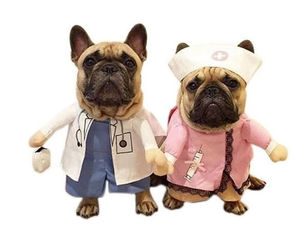 french bulldog costumes