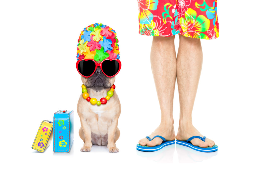 how do i keep my french bulldog cool