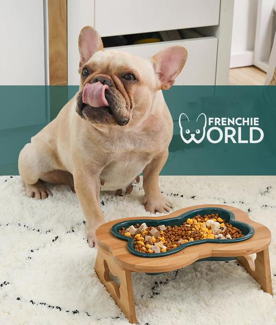 french bulldog feeding bowls
