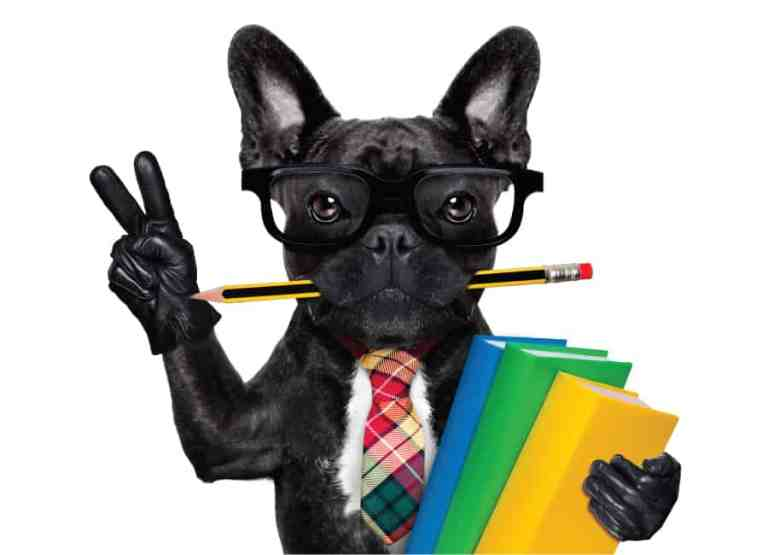are french bulldogs smart