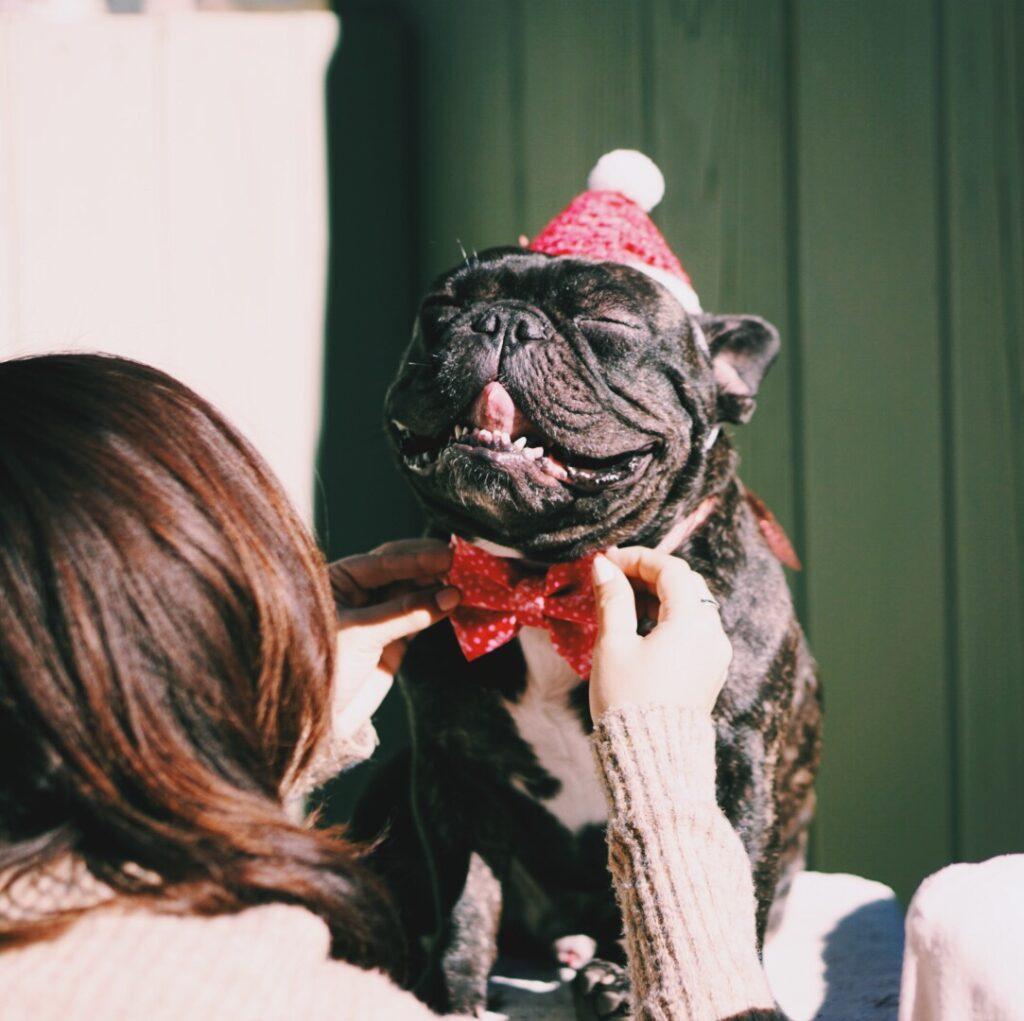 french bulldogs scream