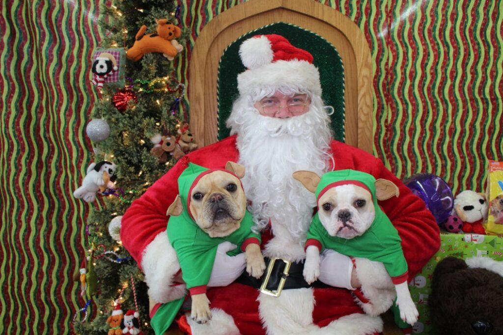 french bulldog christmas gift ideas