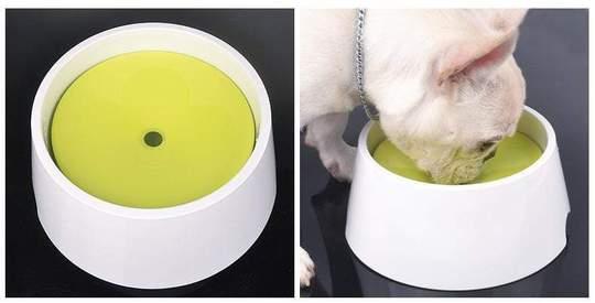 french bulldog vomiting