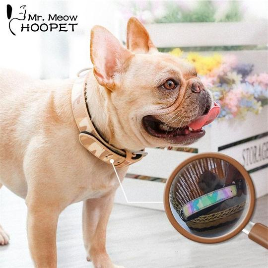 collars for frenchies