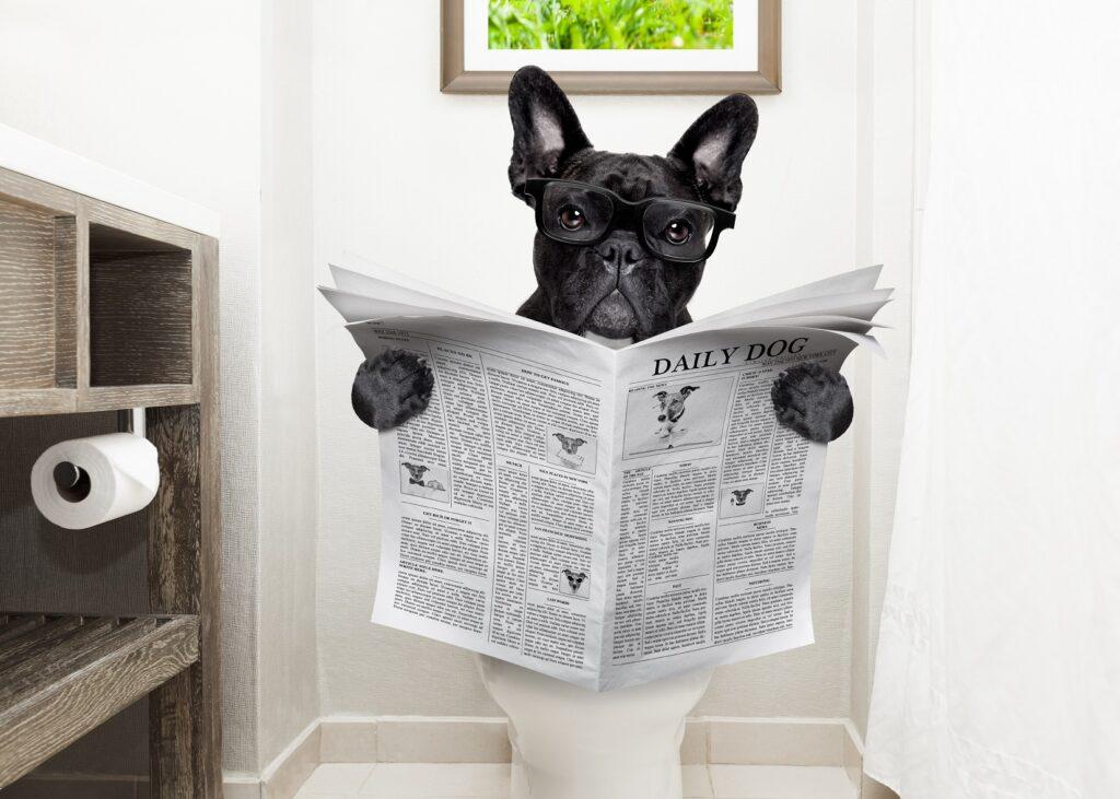diarrhea in french bulldogs