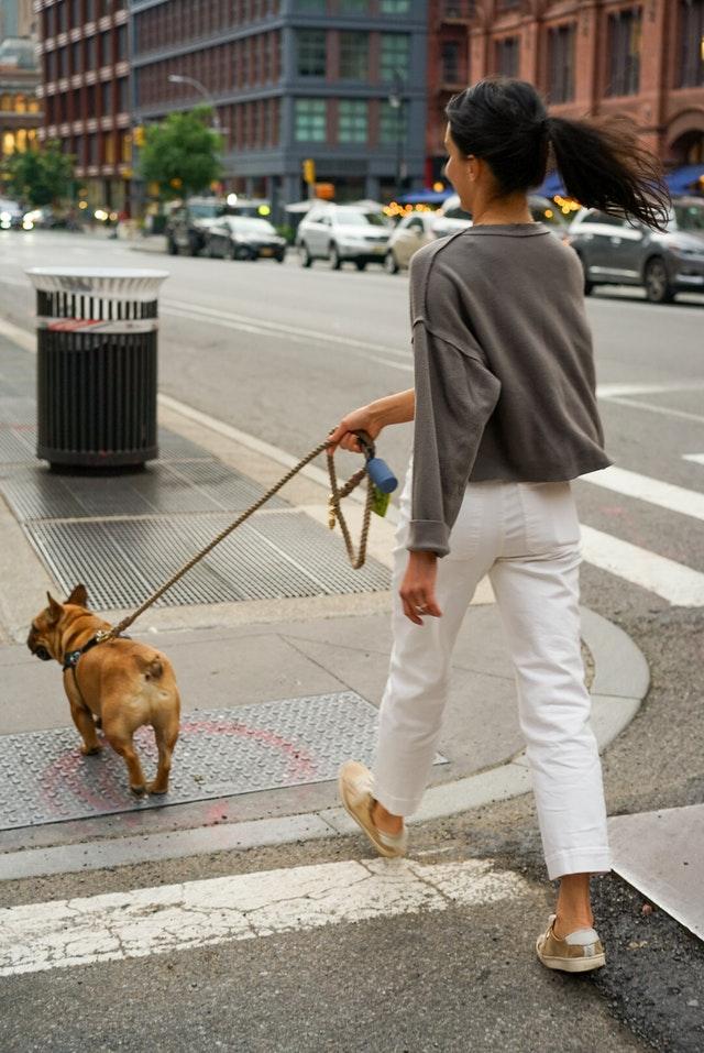 training a french bulldog