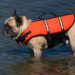 Top Five French Bulldog Life Jackets! Ask Frenchie!